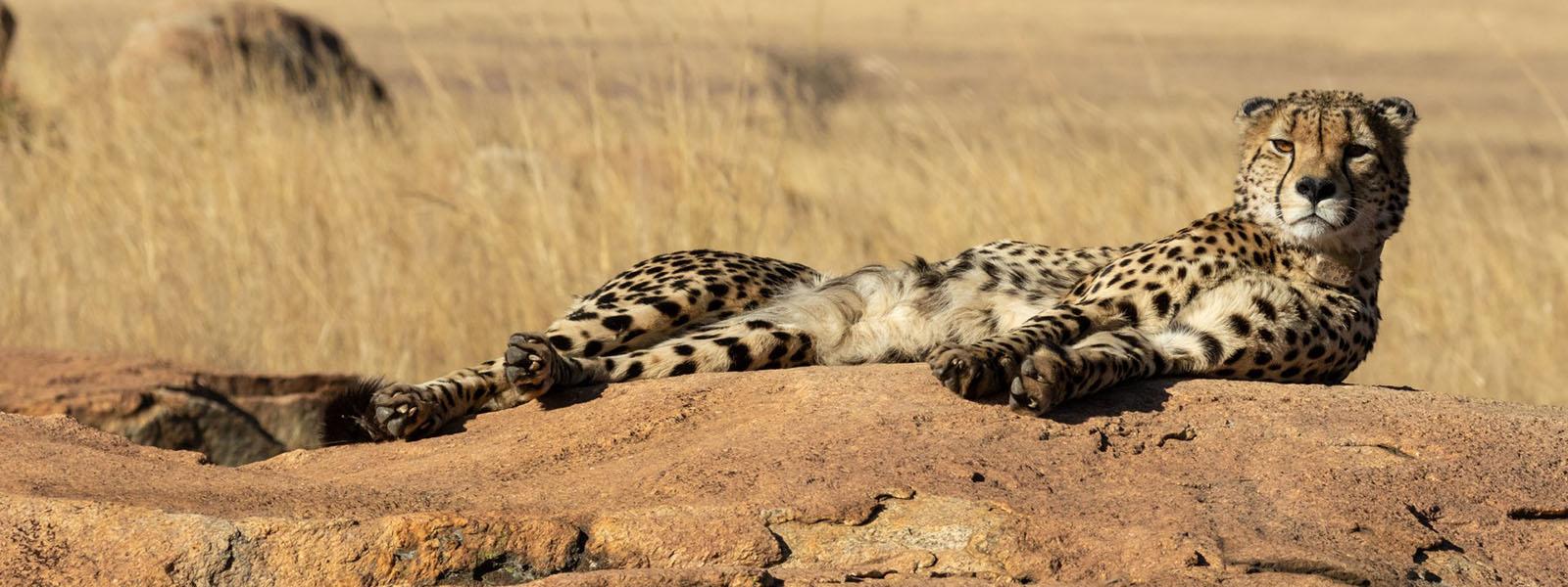 Luxury Kenya Safaris