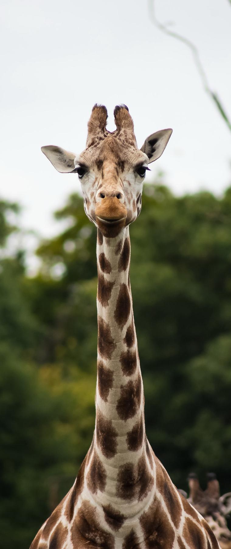Africa Group Safaris
