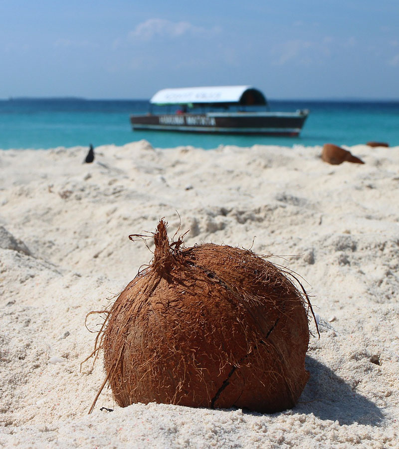 BEST Safari Destinations in Zanzibar