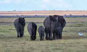 1 Day Murchison Falls Safari