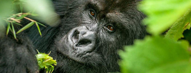 10 Days Luxury Vacation in Uganda