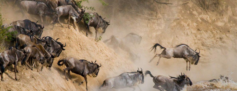 12 Days Gorilla Trekking & Wildebeest Migration Special
