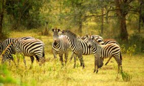 15 Days Uganda Travel Package
