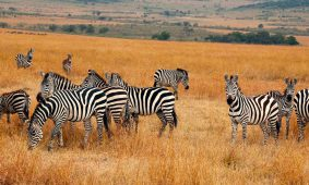 20 Days Uganda Discovery Safari
