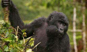 3 Days Bwindi Luxury Safari