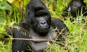 3 Days Rwanda Gorilla Luxury Safari