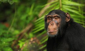 5 Days Uganda Wildlife & Chimpanzee Safari
