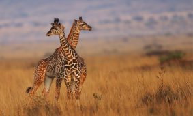 9 Days Lifetime Kenya Holiday