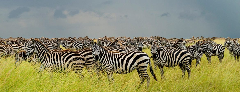 9 Days Tanzania Northern Circuit Safari