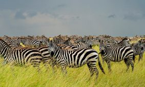 9 Days Tanzania Northern Circuit Safari